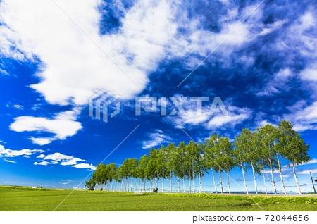 北海道美瑛町的藍天和白樺樹的行 72044656