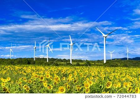 푸른 하늘과 누노 비키 고원의 해바라기 후쿠시마 현 코리 야마시 72044783