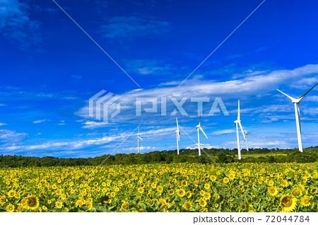 푸른 하늘과 누노 비키 고원의 해바라기 후쿠시마 현 코리 야마시 72044784