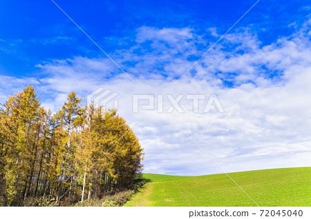 Blue sky and autumnal larch forest Biei-cho, Hokkaido 72045040