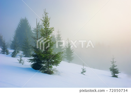 fog on a sunny winter morning. spruce trees among the glowing mist. beautiful scenery in mountains. hills covered in snow. cold frosty weather 72050734