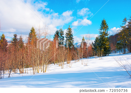 winter landscape in afternoon light. beautiful nature scenery in mountains. leafless trees on a snow covered slope. wonderful sunny weather with clouds on the sky 72050736