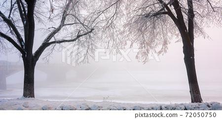 trees on the snow covered embankment. winter cityscape. longest linden alley in europe, uzhgorod, ukraine. bridge in the hazy distance 72050750