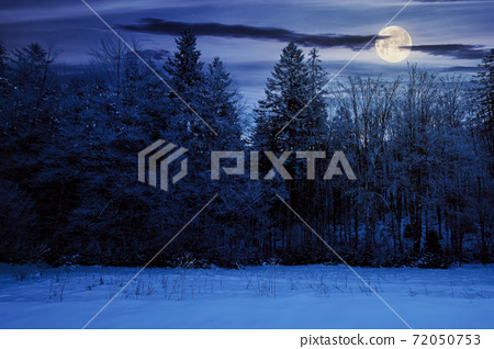 forest on a misty night. trees in hoarfrost. beautiful winter scenery in foggy weather in full moon light 72050753