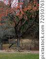 奈良公園的鹿 72050763