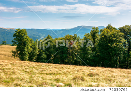 yellow grass on the meadow in mountains. beautiful nature landscape beneath a blue sky with fluffy clouds at high noon. 72050765