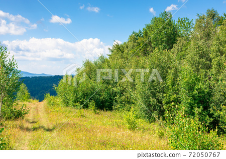 young forest on the meadow in mountains. summer nature scenery with range of trees beneath a blue sky with fluffy clouds in summer 72050767