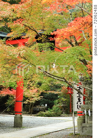 Autumnal leaves and torii 72062488