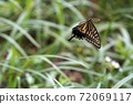 美麗的燕尾蝴蝶在天上飛 72069117