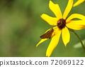 一隻可愛的蝴蝶,坐在一朵黃色的花和休息的蝴蝶 72069122