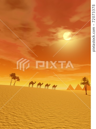 Camels in the desert 72073378