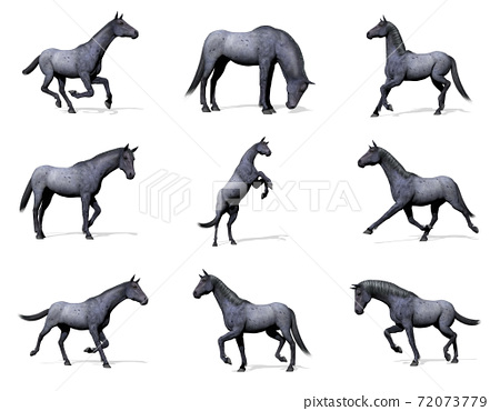 Set of blue roan horses - 3D render 72073779