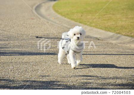 散步的小狗(Martinee) 72084503