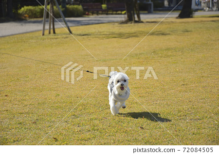 散步的小狗(Martinee) 72084505