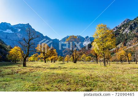 maple trees at Ahornboden, Karwendel mountains, Tyrol, Austria 72090465
