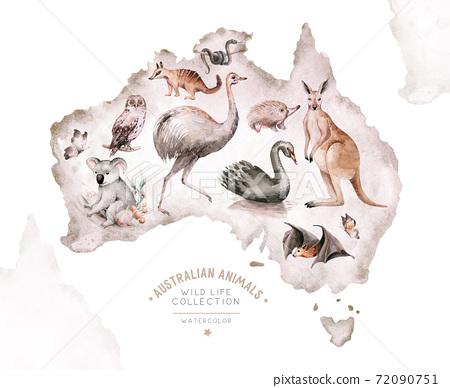 Watercolor australian cartoon kangaroo, ostrich Emu , koala and flying fox, owl, Echidna . Australian Black Swan and numbat Kookaburra , cockatoo kids illustration. Nursery 72090751