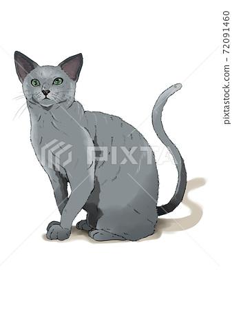 俄羅斯藍貓 72091460