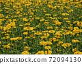 꽃밭 72094130