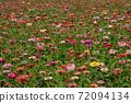꽃밭 72094134