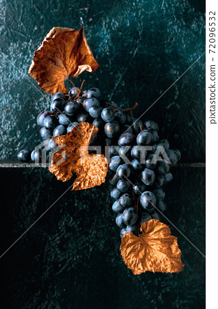Blue grapes with dried up vine leaves on an old dark blue background. 72096532