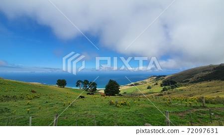 뉴질랜드 더니든에 해변이 보이는 아름 다운 언덕 72097631