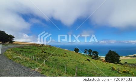 뉴질랜드 더니든에 해변이 보이는 아름다운 언덕 72097632