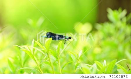 푸른 숲속에 검은 물잠자리 72102678