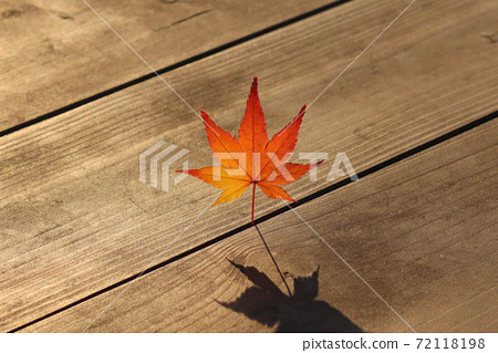 가을 햇살 아래 하나의 단풍잎  72118198