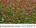 꽃밭 72120375