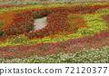 꽃밭 72120377