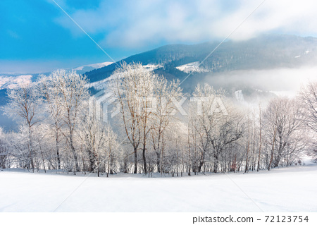 trees in hoarfrost on a snow covered hill. fairy tale winter mountain landscape. foggy weather on a sunny day 72123754
