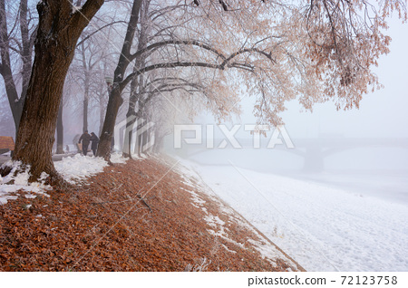 trees in mist on a frosty morning. wonderful urban scenery in wintertime. location linden alley on the embankment of river uzh 72123758