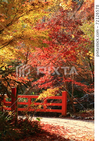 神蔵寺의 단풍 72126578