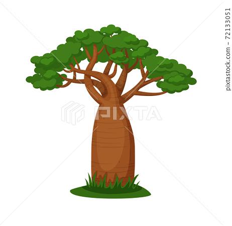 Green baobab tree isolated on white background 72133051