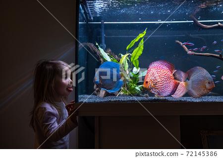 2-3 year old child watching fish swiming in big fishtank, aquarium. 72145386