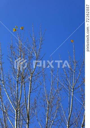 樹頂 잎 72162887