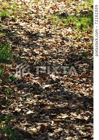 Fallen leaf diameter 72162889