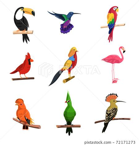 Exotic Birds Set 72171273