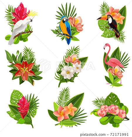 Tropical birds and flowers pictograms set 72171991