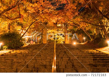 秋天的樹葉在晚上照亮[福岡縣大正府市] 72172163