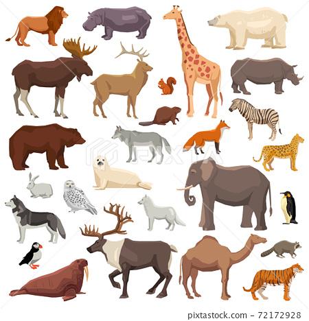 Animals Big Set 72172928
