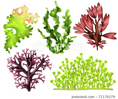 Realistic Sea Weeds Food Set 72176379