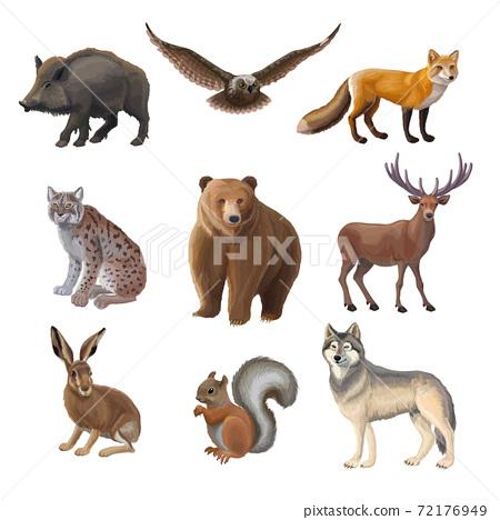 Cartoon Forest Animals Set 72176949