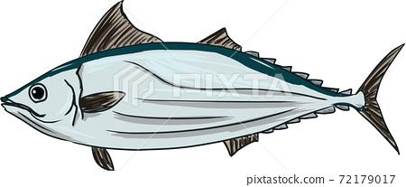魚的簡單的手寫的插圖 72179017