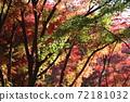 단풍 계곡 (직녀 공원)의 단풍을 일본식 테이스트로 찍어 보았습니다 72181032