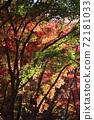 단풍 계곡 (직녀 공원)의 단풍을 일본식 테이스트로 찍어 보았습니다 72181033