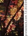 단풍 계곡 (직녀 공원)의 단풍을 일본식 테이스트로 찍어 보았습니다 72181034