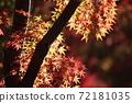 단풍 계곡 (직녀 공원)의 단풍을 일본식 테이스트로 찍어 보았습니다 72181035