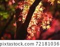 단풍 계곡 (직녀 공원)의 단풍을 일본식 테이스트로 찍어 보았습니다 72181036