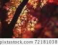 단풍 계곡 (직녀 공원)의 단풍을 일본식 테이스트로 찍어 보았습니다 72181038